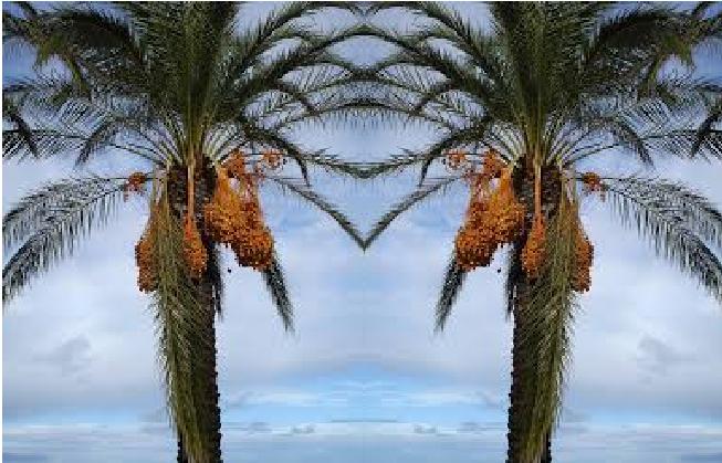 Peygamberimiz'in Mucizesi, karşısına çıkan her ağaç ve dağ selam veriyor